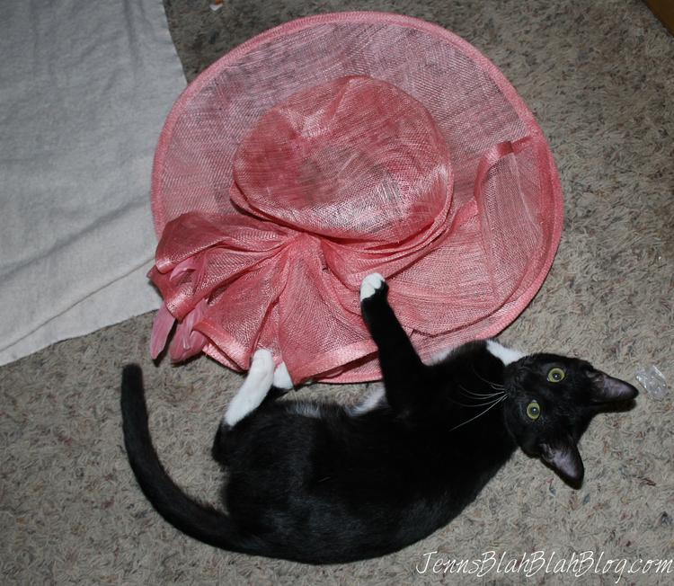 Cat Playing With Hat