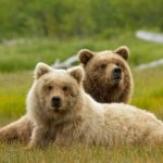 Disneynature Bears Trailer Don't Miss the Heartwarming Sneak Peek
