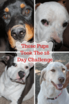 Six Reasons My Dogs Did The Skittles Bright Eyes after taking the Purina ONE® 28-Day Challenge