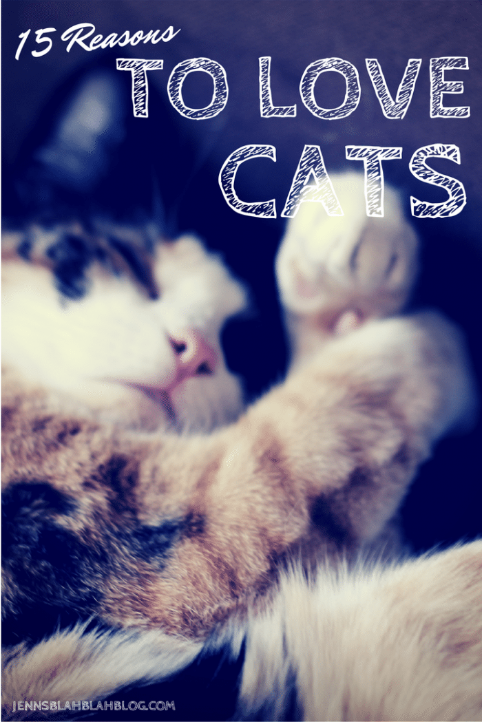 Reasons To Love Cats   #jbbb http://jennsblahblahblog.com #cats #pets