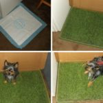 How To Bring The Great Outdoors To Your Inside Dog!