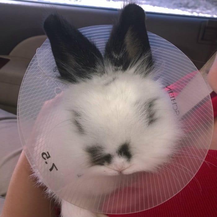 cone head bunny