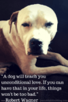 """A dog will teach you unconditional"