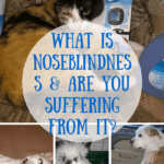 What is Noseblindness & Are You Suffering From It? | PLUS Enter Two Fabulous Giveaways
