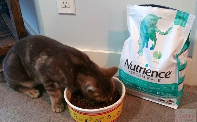 Nutrience pet food review + GIVEAWAY!!