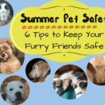 Summer Pet Safety: 6 Tips to Keep Your Furry Friends Safe