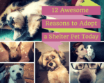 12 Awesome Reasons to Adopt a Shelter Pet Today