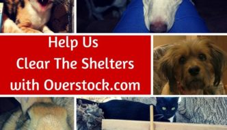 Help Us Clear The Shelters with Overstock.com