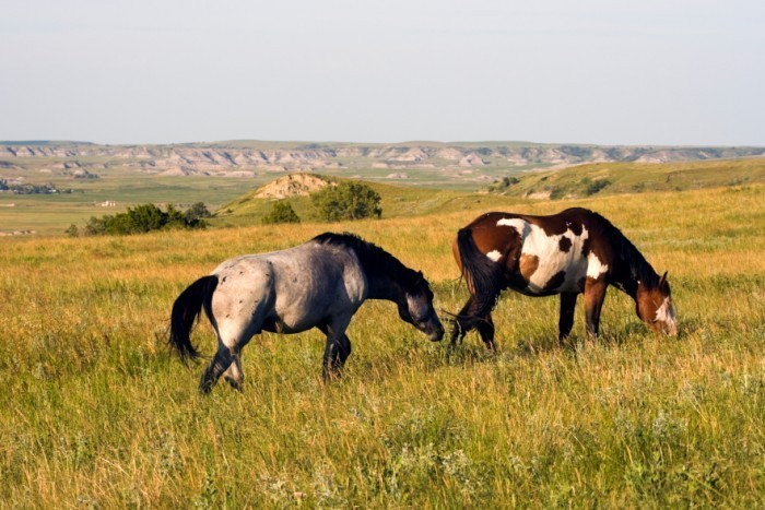The Back Hills Wild Horse Sanctuary in Hot Springs South Dakota
