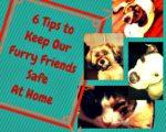 6 Tips to Keep Our Furry Friends Safe at Home