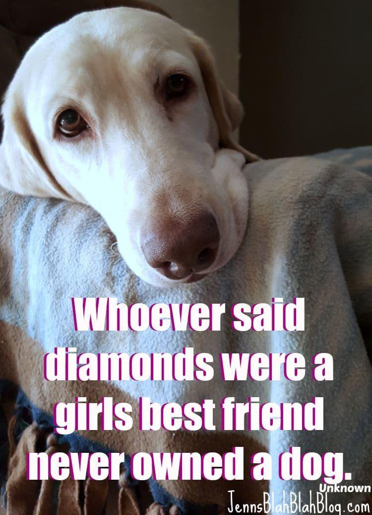 quotes for dogs