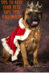 Five Tips To Keep Your Pets Safe This Halloween