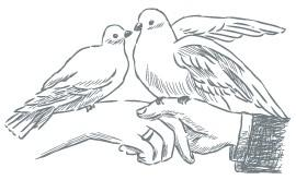 wedding-doves