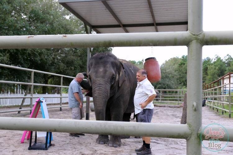 Asian Elephant Orlando Florida Trip