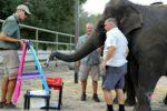 Our Recent Visit To Ringling Bros Center for Elephant Conservation