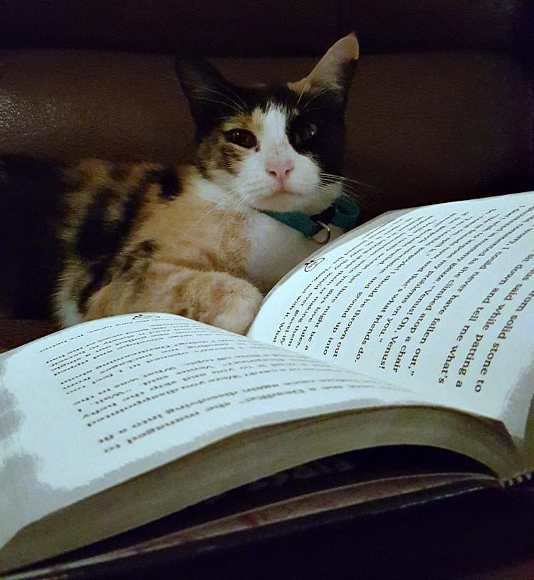 Cats are smart Things Peope Don't Tell You About Owning a Cat
