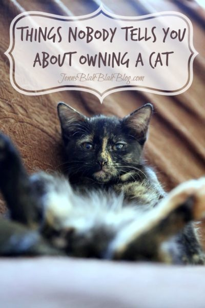 Things Nobody Tells You about Owning a Cat