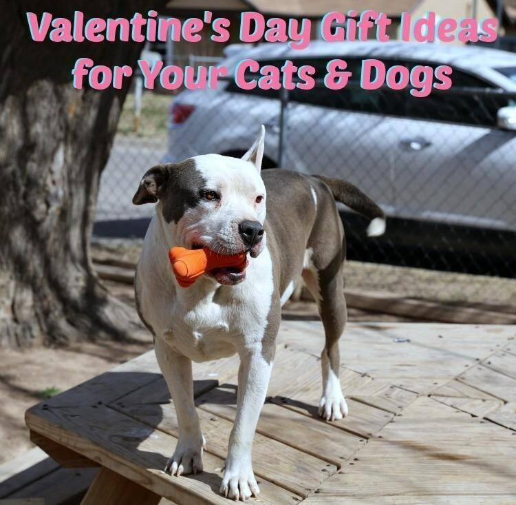Awesome Valentine's Day Gift Ideas for Your Cats & Dogs