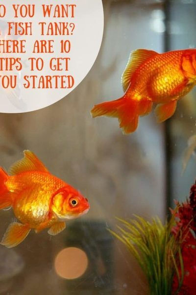 So you want a fish tank? Here Are 10 Tips to Get You Started