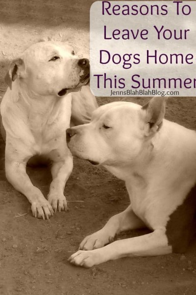 REASONS TO LEAVE YOUR DOGS HOME THIS SUMMER