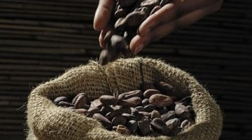 Chocolate, Your Health, and You: What You Need to Know