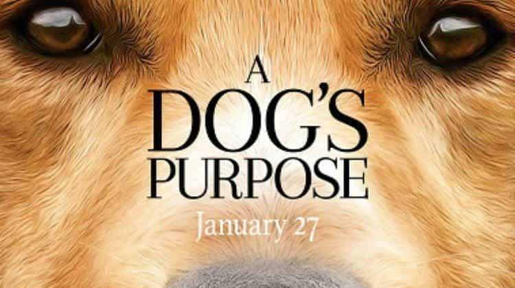 A DOG'S PURPOSE – THE MOVIE