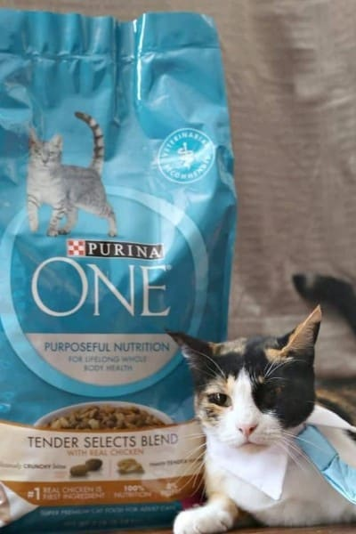 Have You Considered Your Cats Whole Body Health?