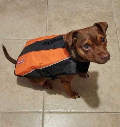 Get Ready for the Elements with EzyDog