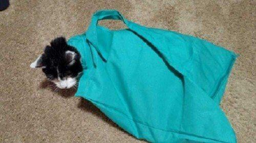 The Perfect Carrier for your Feline Friend – The Purrfect Pouch 4
