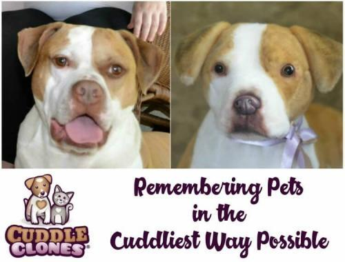 Remembering Pets in the Cuddliest Way Possible