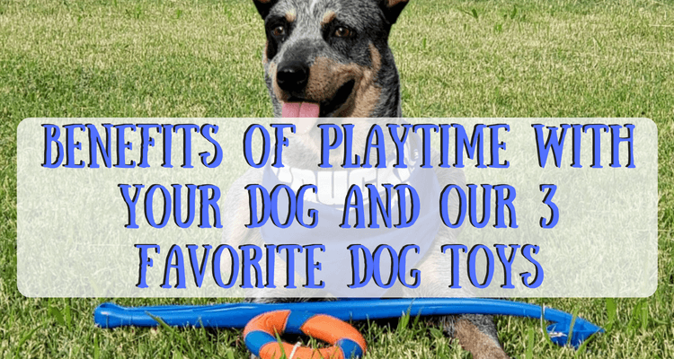 Benefits of Playtime With Your Dog and our 3 Favorite Dog Toys