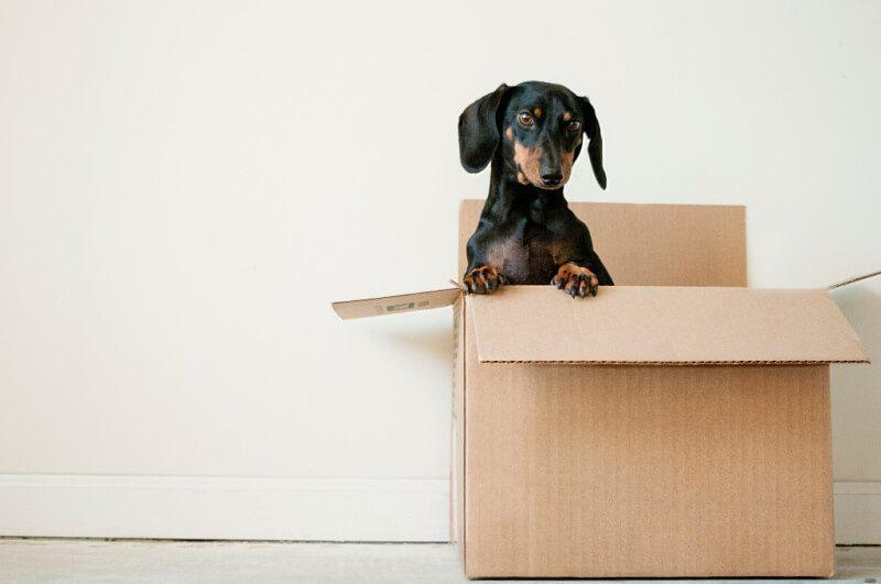 Do Not Forget to Consider These Things before You Hire a Moving Company in LA