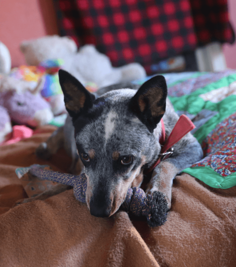 Holiday Gift Guide for Your Dog Featuring iHerb Products 3