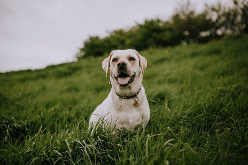 Using CBD Oil for Your Pets