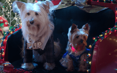 Puppy Star Christmas on Netflix 4