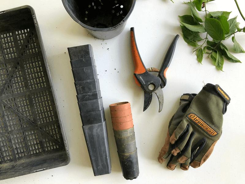 Top Gardening Tips for Beginners