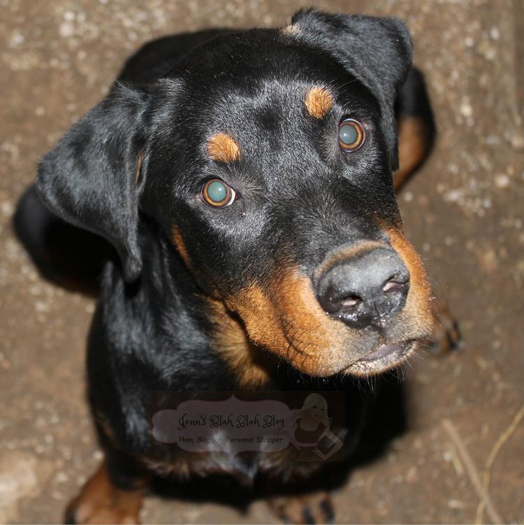 Don't Miss ALPO's Blog Dog Video's #HappyStartsHere! 8