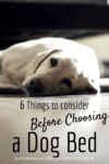 6 Things To Consider Before Choosing A Dog Bed