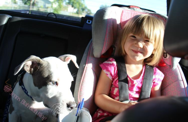 Tips To Help Your Pets Avoid The Back-to-School Blues 2
