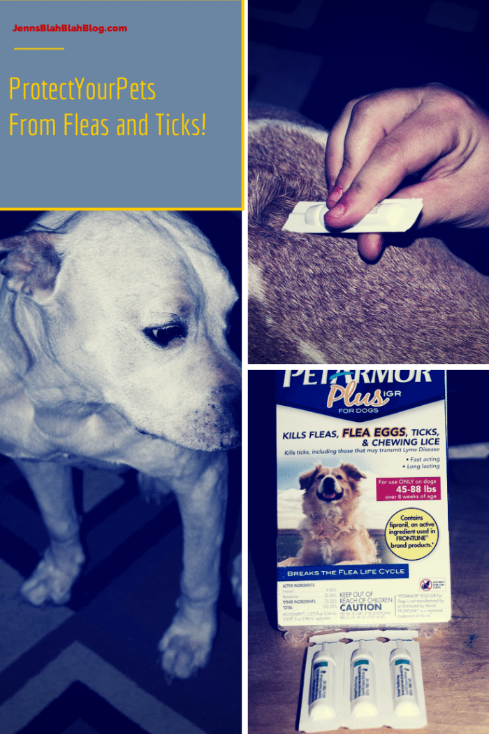 Protect Your Pets  from fleas and ticks