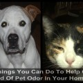 Things You Can Do To Help Get Rid Of Pet Odor In Your Home