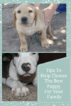 Tips To help you choose the best puppy for your family