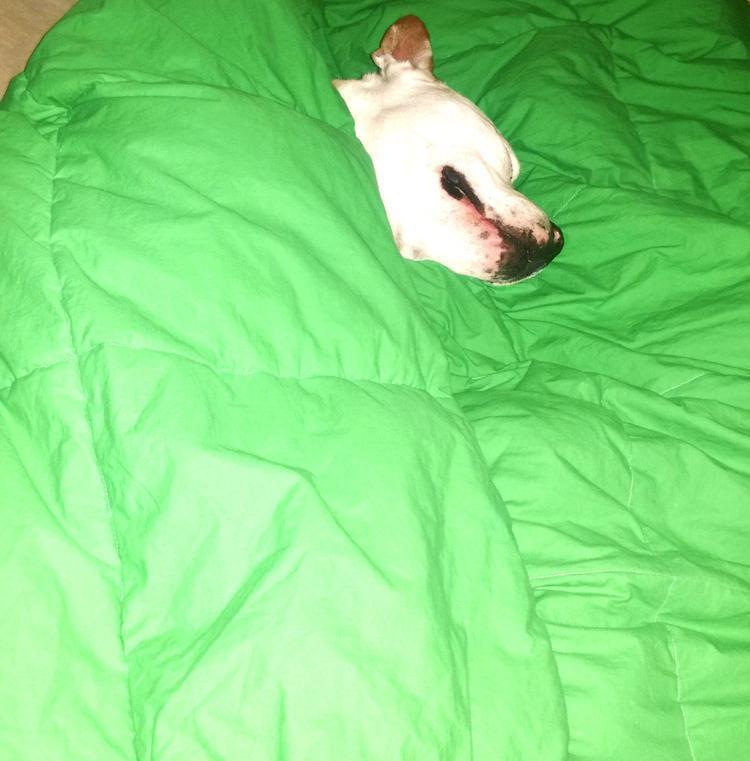Don't Miss ALPO's Blog Dog Video's #HappyStartsHere! 6