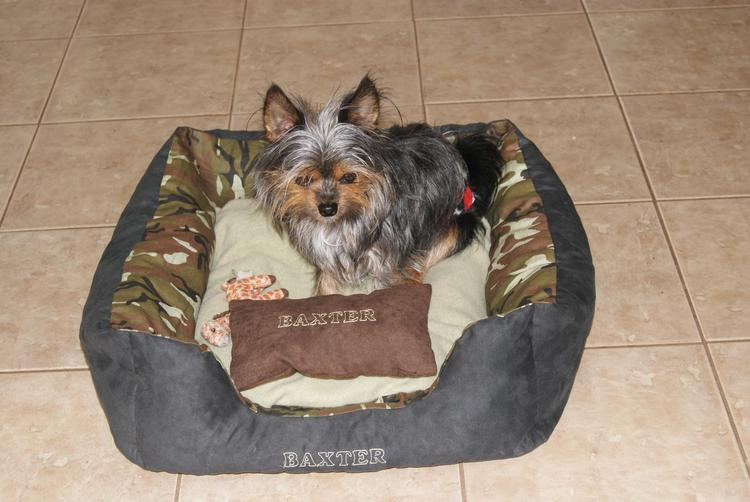 Looking For The Perfect Doggy Bed? Dogbedz.co.uk Has What Your Looking For!! #GiftGuide 2