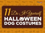 11 Do It Yourself Halloween Costume Ideas For Dogs!