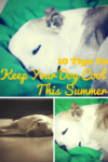 tips to keep your dog cool this summer 100x150 Meet Skittles The Pit Bull Funny Dog  Hes a Rockstar Sleeper!