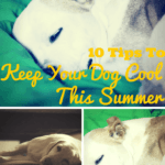 Ten Tips To Keep Your Dog Cool This Summer